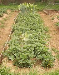 Los cultivos ecol gicos caseros consejos para el for Que es una mesa de cultivo