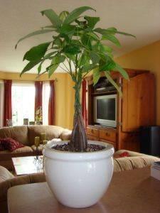 Ideas y colores para pintar y decorar la casa cmo review - Ideas como pintar mi casa ...