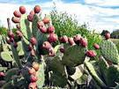 planta de cactus
