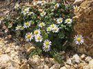 Plantas de sol