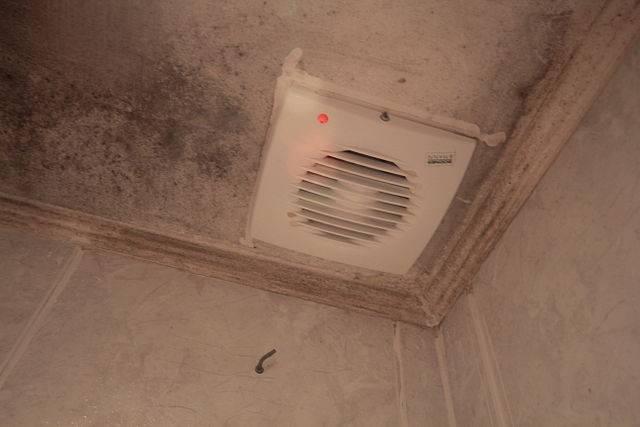 C mo quitar el moho de la ducha - Quitar manchas de moho en paredes sin lejia ...