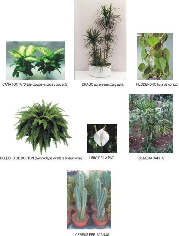 Las plantas en el feng shui plantas que limpian el aire for Como eliminar el desorden con el feng shui