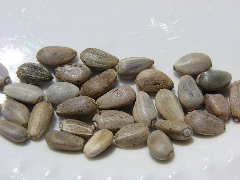 Alcachofa en semillas
